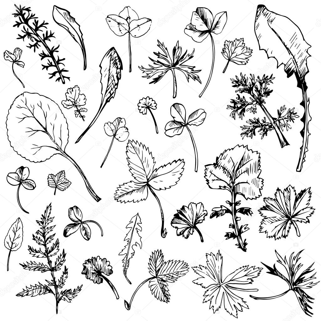 Set of ink drawing leaves — 스톡 벡터 © cat_arch_angel #111287106