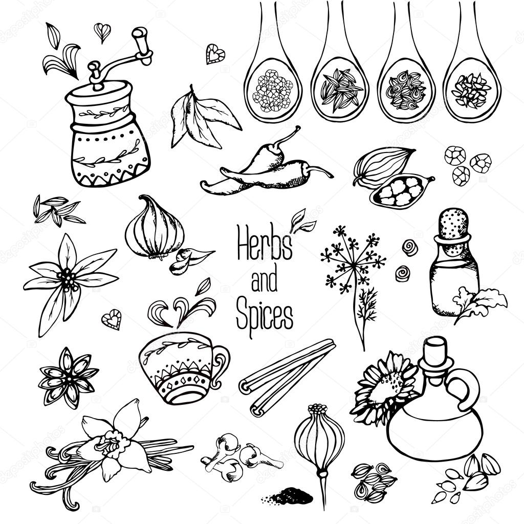 Herbs and spices — Stock Vector © inifer22 #102825422