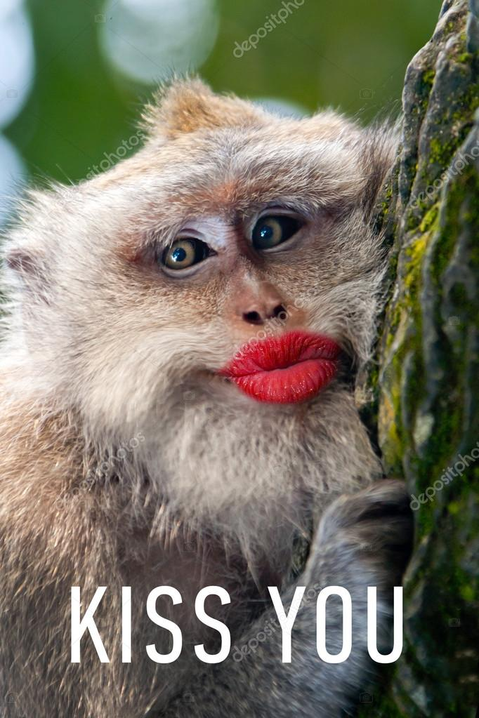 Monkey With Red Lips : monkey, Funny, Monkey, Stock, Photo,, Image, Watman, #69191113