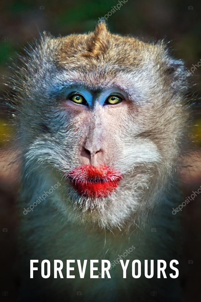 Monkey With Red Lips : monkey, Funny, Monkey, Stock, Photo,, Image, Watman, #69191787