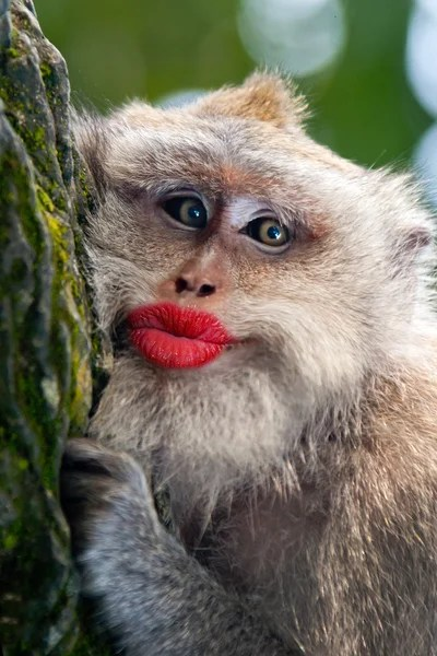 Funny Monkey Pictures Images : funny, monkey, pictures, images, Funny, Monkey, Pictures,, Stock, Photos, Images, Depositphotos®
