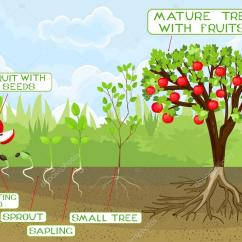 How To Prune An Apple Tree Diagram Wiring For A Light Switch De Fruit That Cures Cancer Elsavadorla