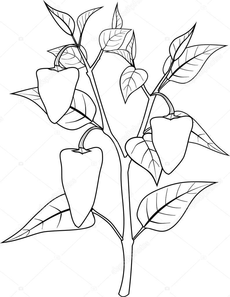 Dibujos Para Pintar De Planta Dulce Plantas Vs Zombies