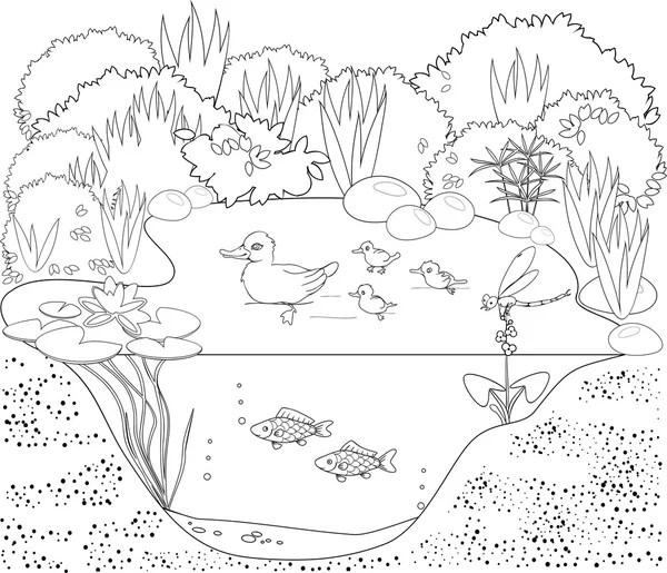 Ecosistema de la charca del pato — Archivo Imágenes