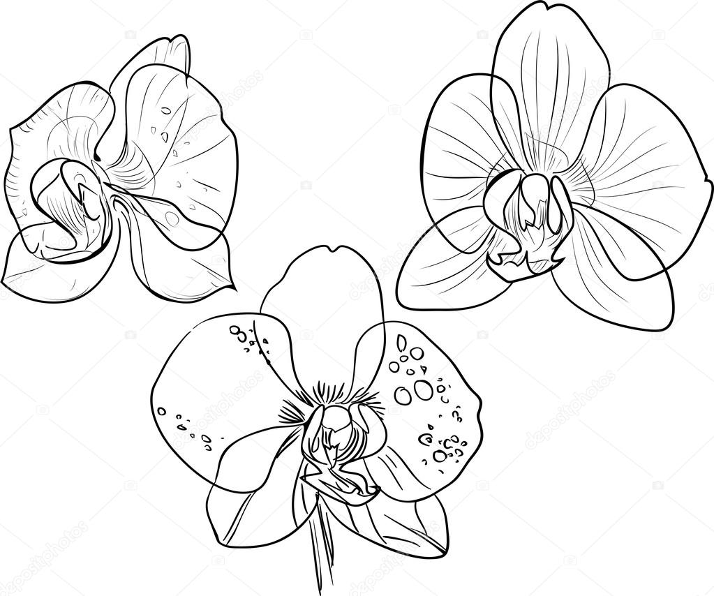 Coloring with orchids — Stock Vector © mariaflaya #90983272
