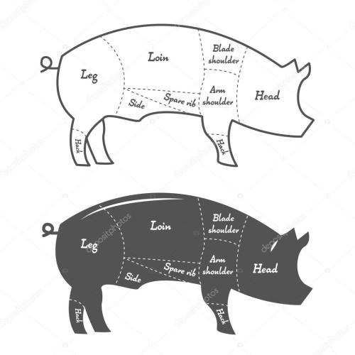 small resolution of detailed illustration or chart of pork cuts vector by deniska11
