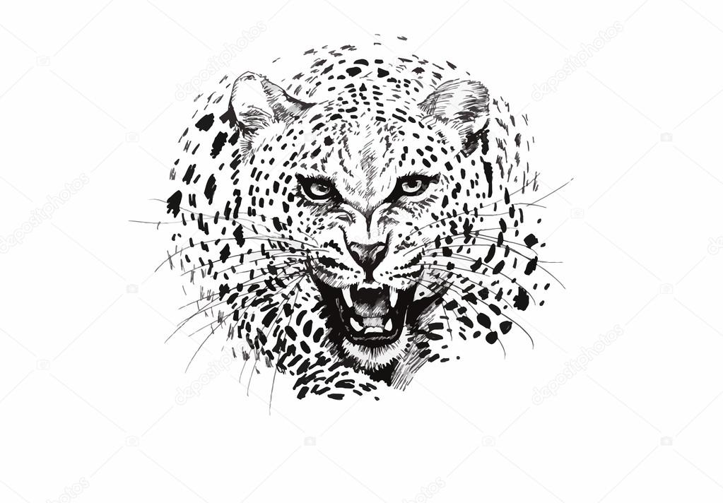 Angry leopard muzzle, black and white sketch — Stock