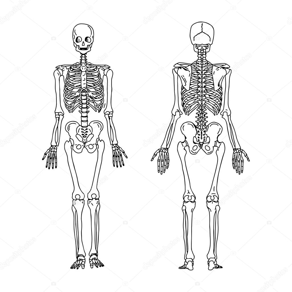 Illustration Vector Hand Draw Doodles Of Human Skeleton