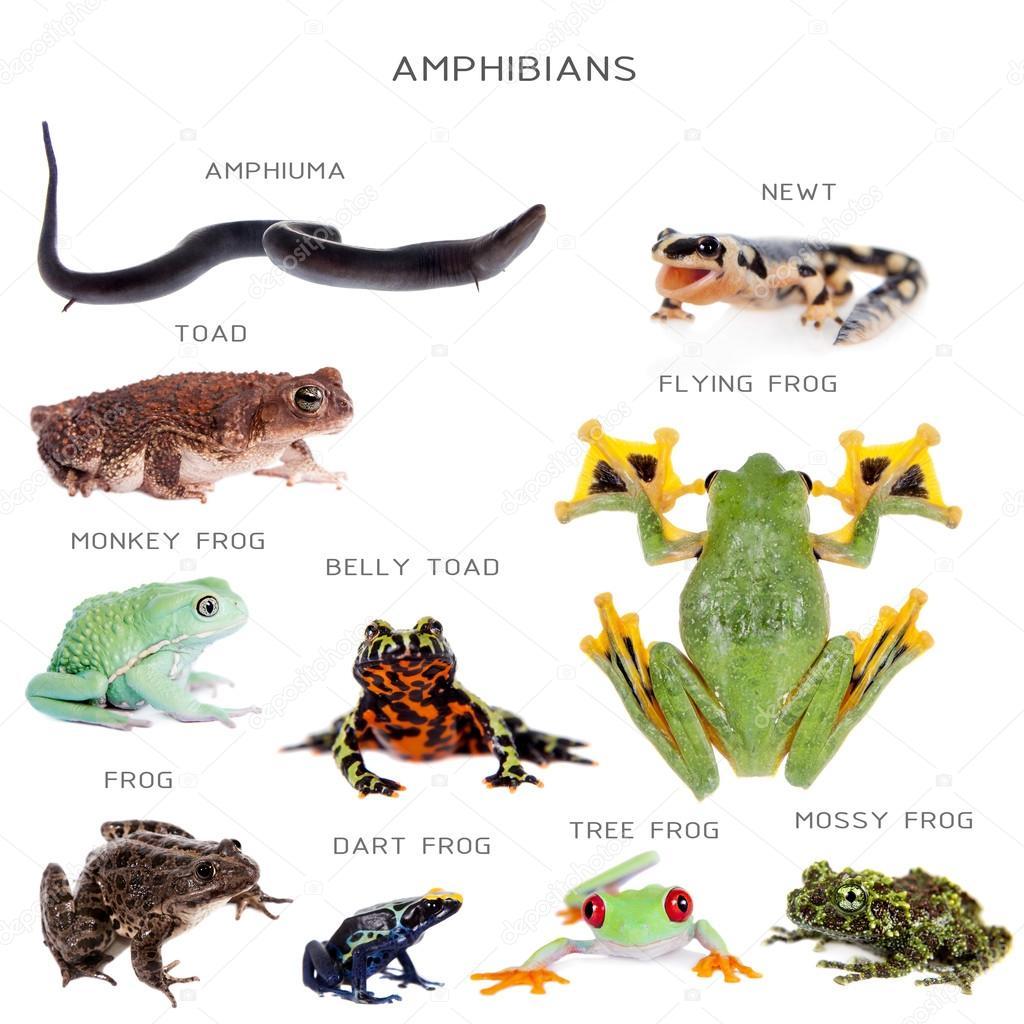 Amphibian Education Set On White