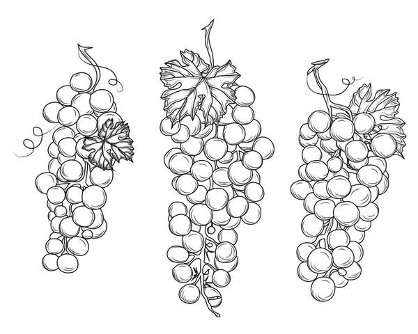 Raspberry ink drawing — Stock Photo © Jaros75 #99008350