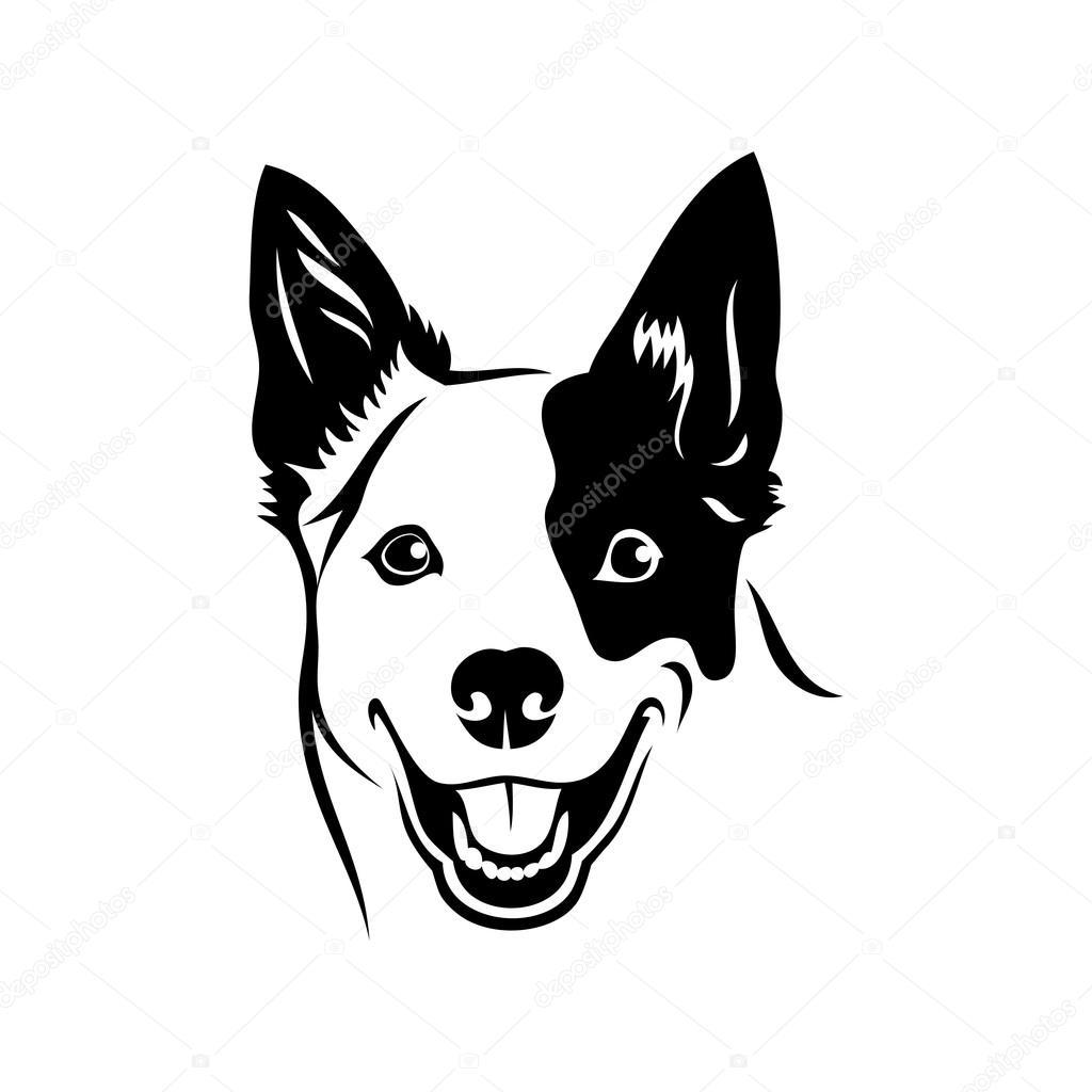 Australian Cattle Dog Head