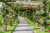 Rose pergola in the Royal Botanical Garden in Kew, England ...