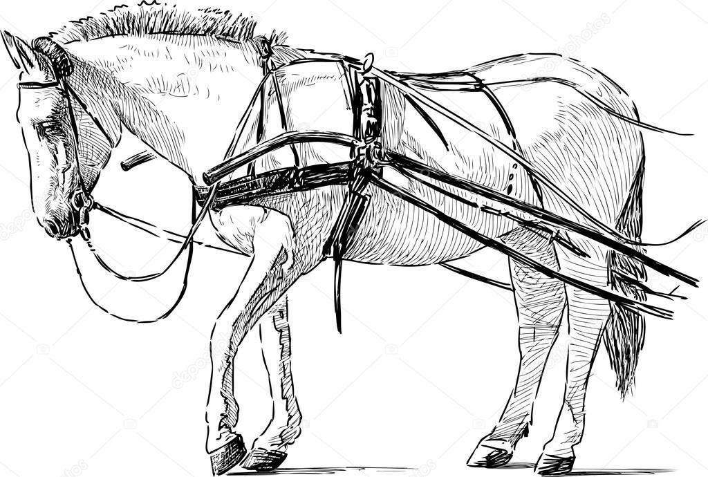 Белая лошадь в упряжке — Векторное изображение