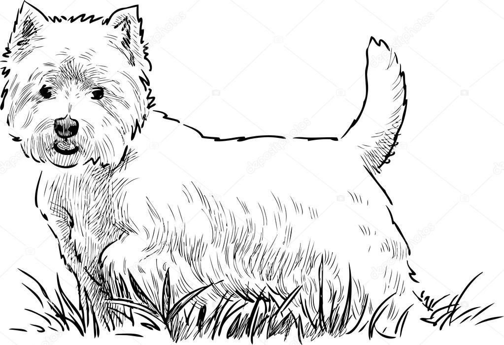Scottish terrier nell'erba — Vettoriali Stock