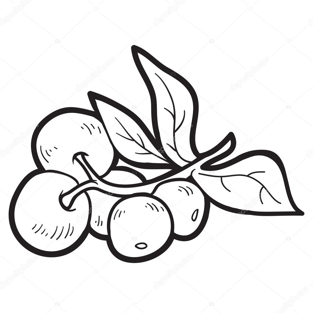 Coloring book: fruits and vegetables (cranberries) — Stock