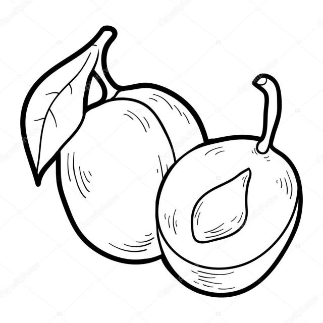 Coloring book: fruits and vegetables (plum) Stock Vector Image by