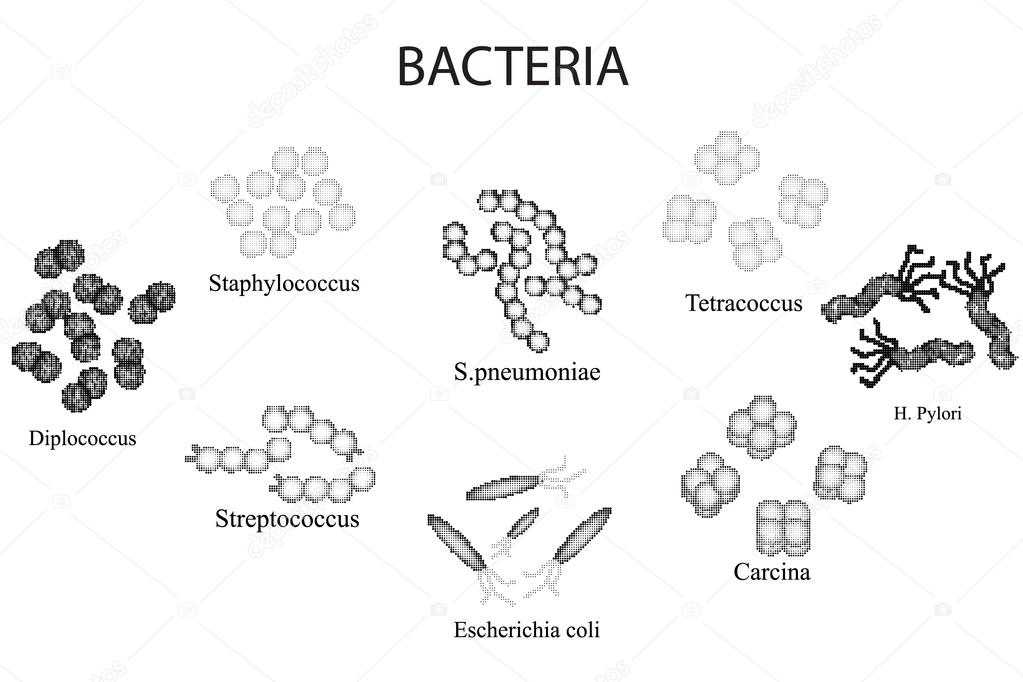 Set of bacteria. Black and white. Staphylococcus