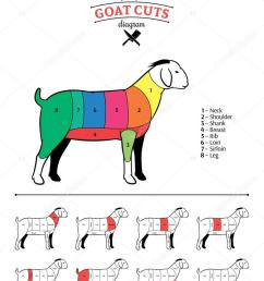 vector cuts of goat diagram isolated on white vector by counterfeit [ 781 x 1024 Pixel ]