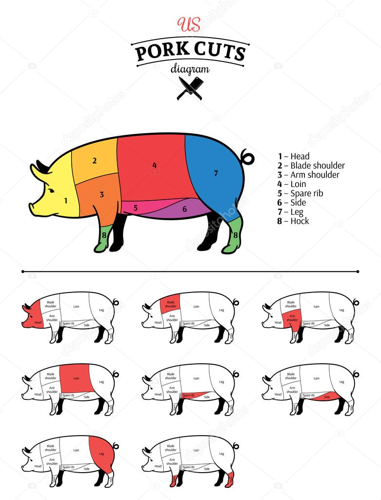 medium resolution of vector american us cuts of pork diagram vector by counterfeit
