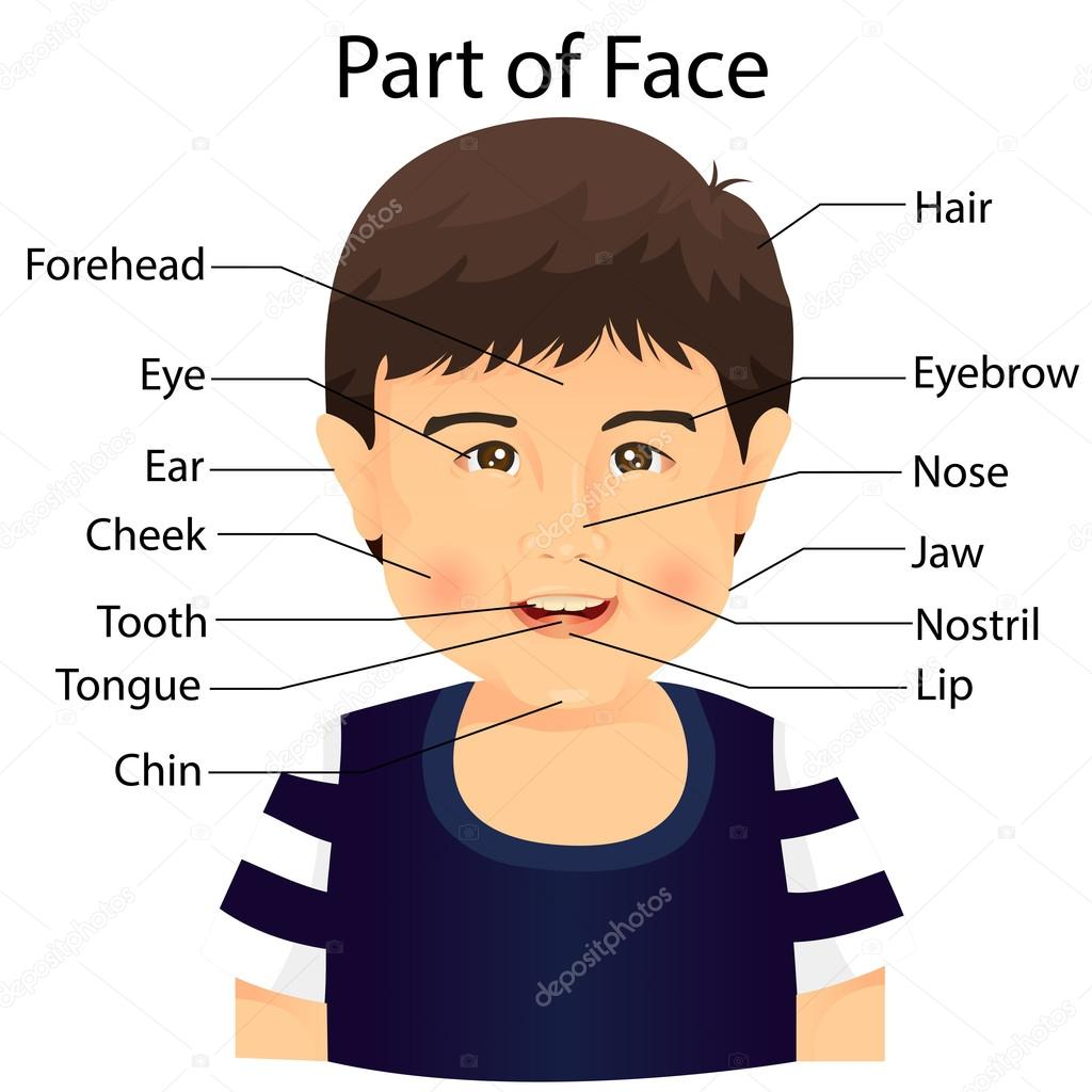 Illustrator Of Part Of Face