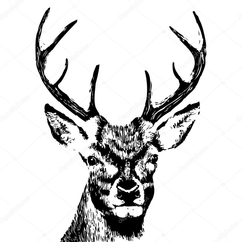 Hand Drawn Deer Head