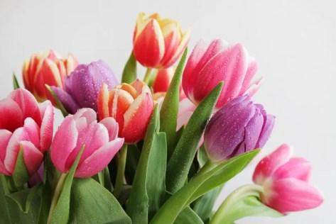 Afbeeldingsresultaat voor afbeelding tulpen