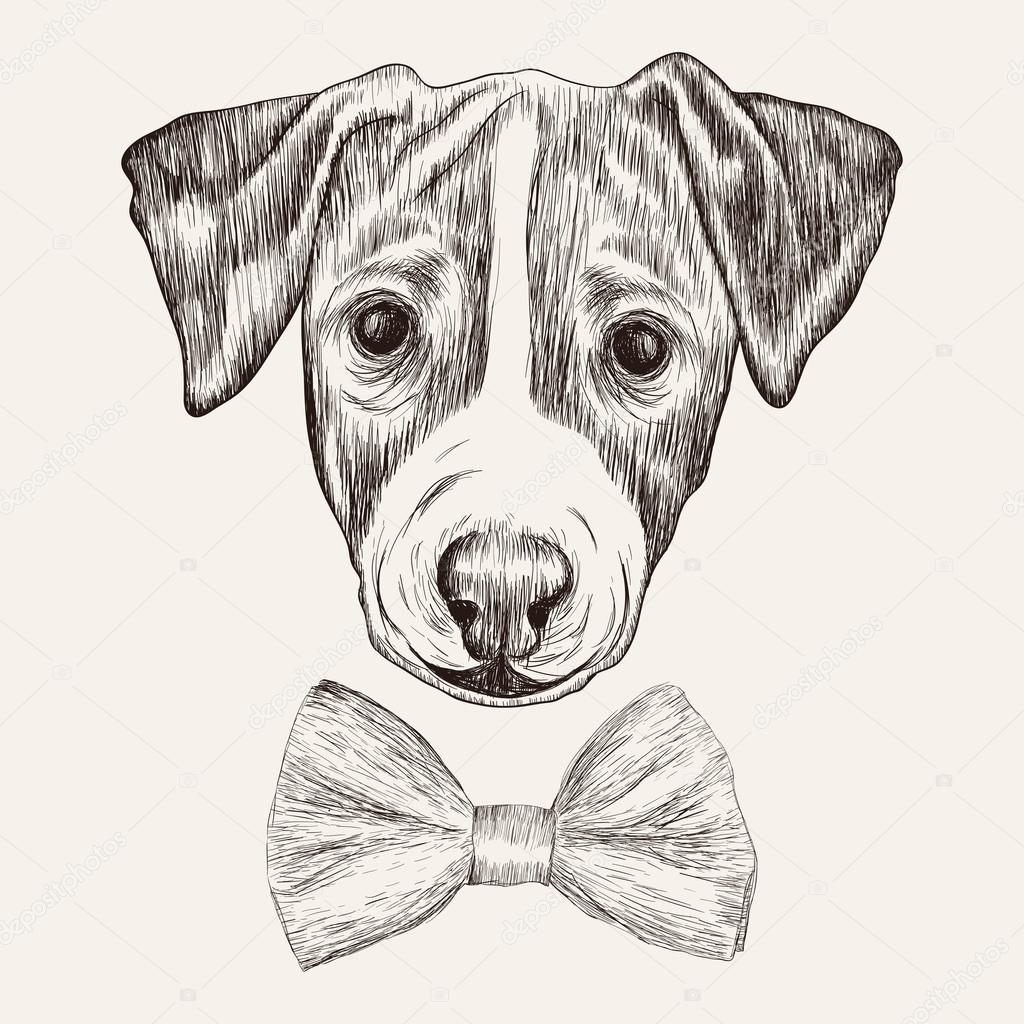 Szkic Jack Russell Terrier Pies Z Muszk R Cznie Rysowane