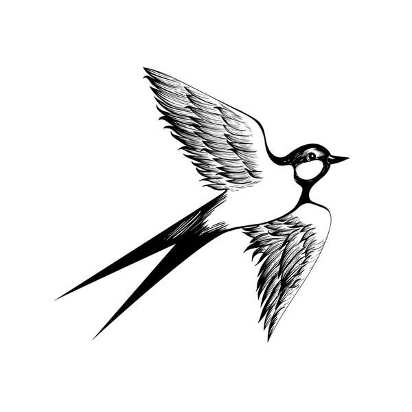 Vectores de stock de Swallow, ilustraciones de Swallow sin