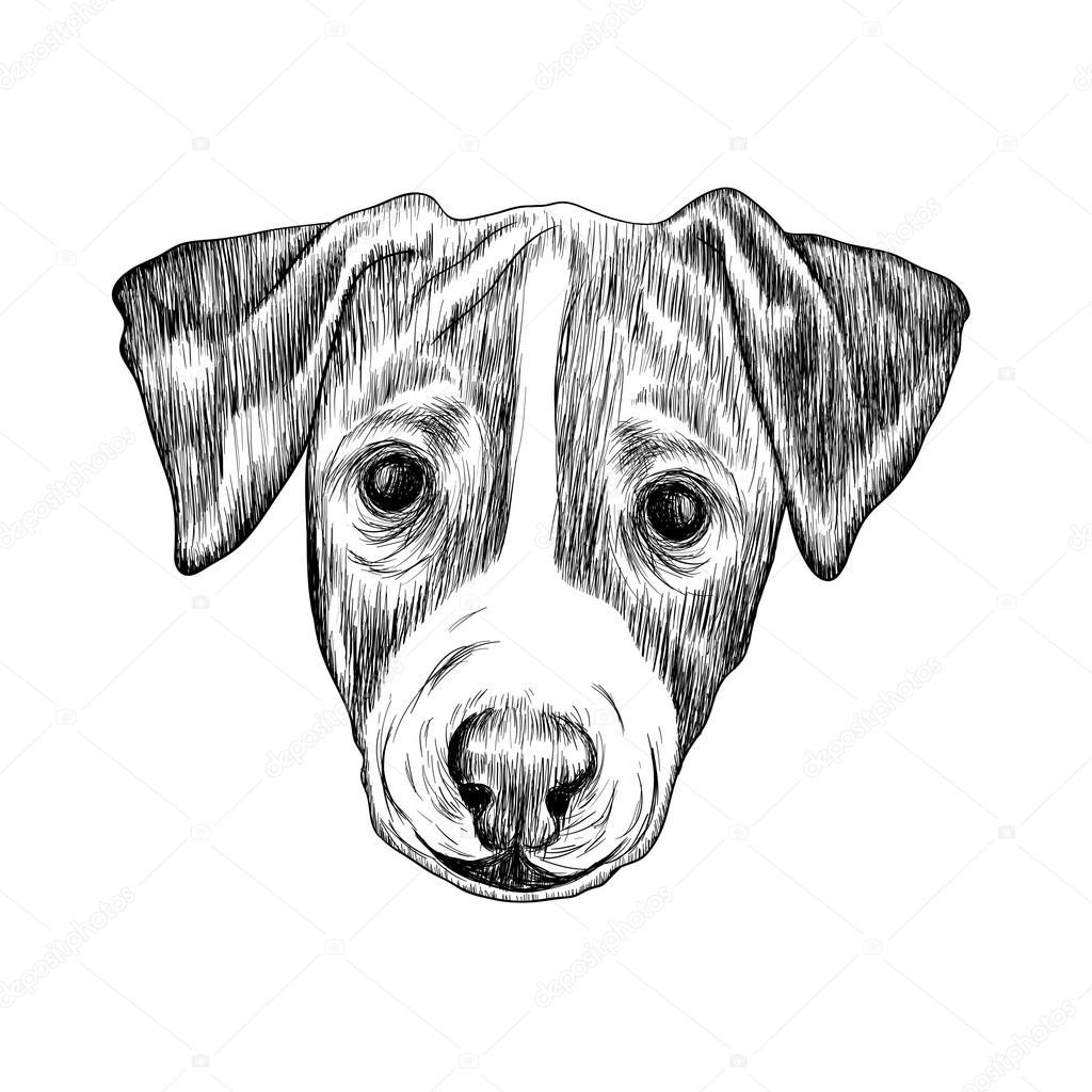 Dibujo Jack Russell Terrier Perro