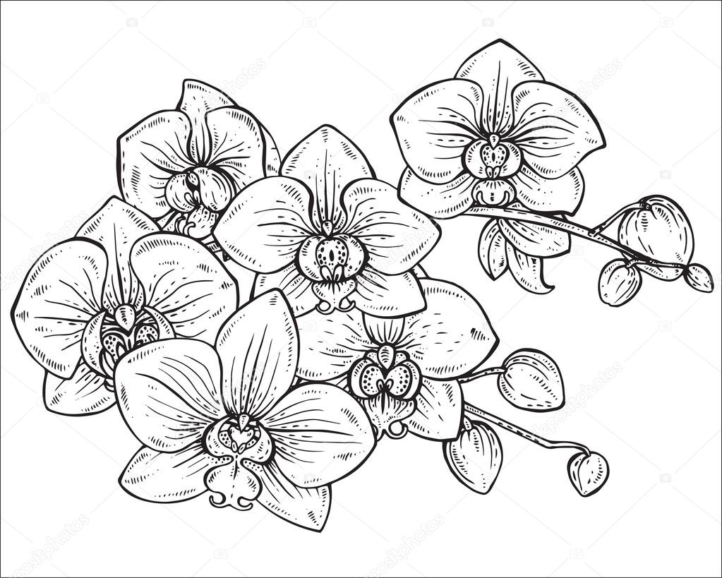 Beautiful monochrome vector floral bouquet of orchid
