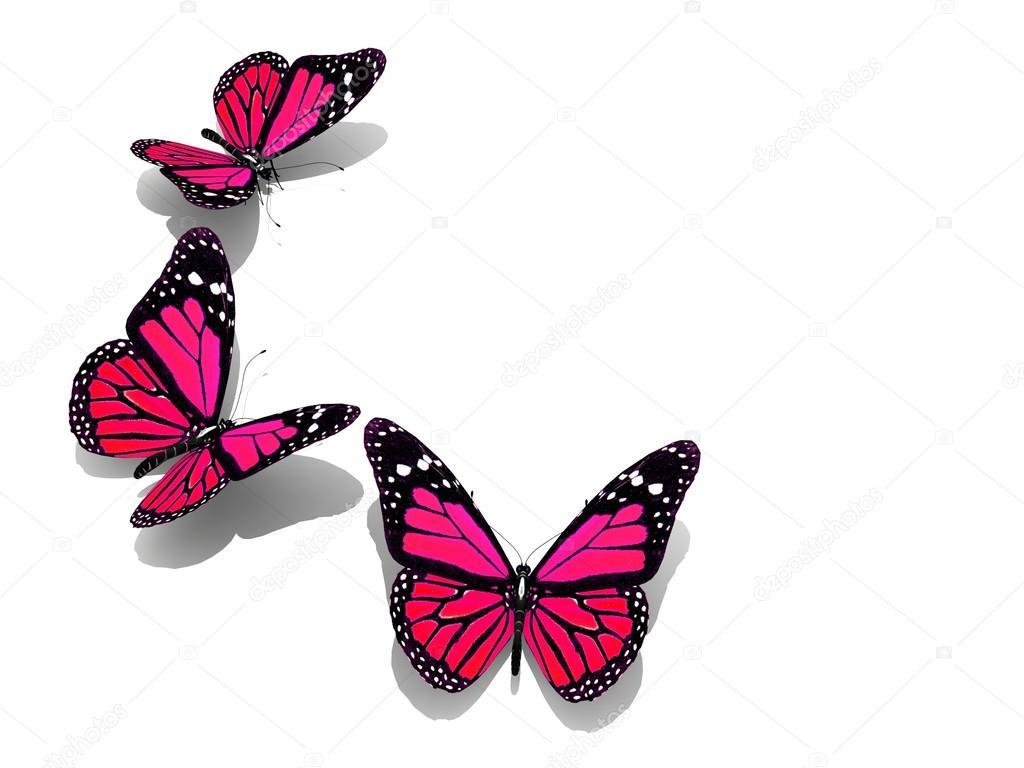 129 Foto Farfalle Colorate  tre farfalle colorate foto