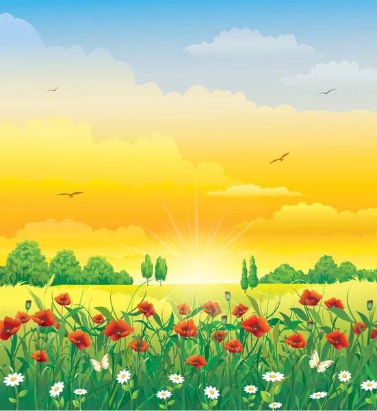 Campo fiorito disegno immagini di stock disegni prato