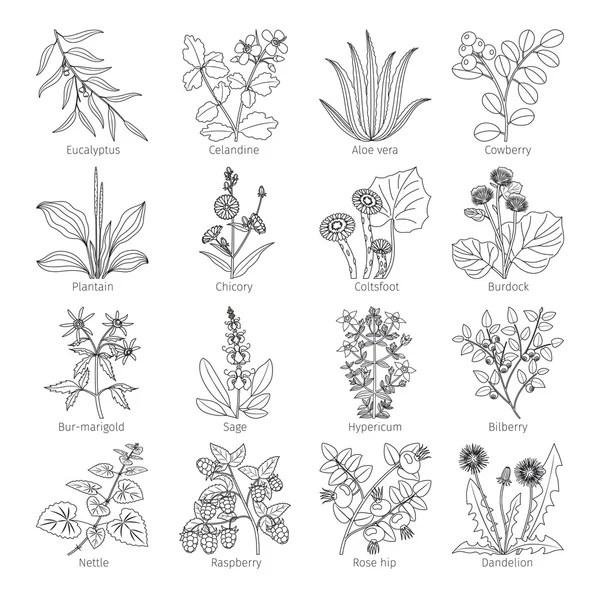 urtiga planta — Vetores de Stock © artnature #44580537