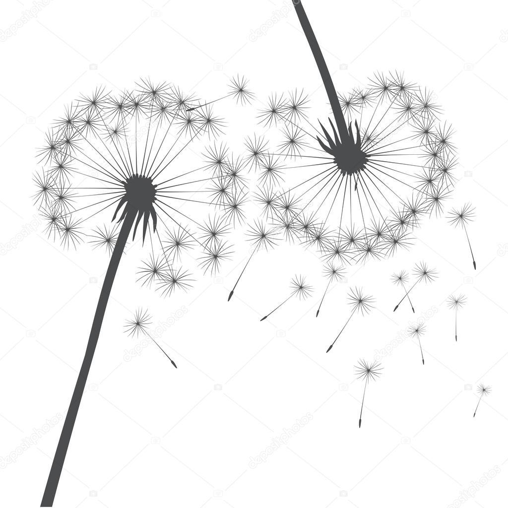 Grey vector dandelion — Stock Vector © rolandtopor #84435514