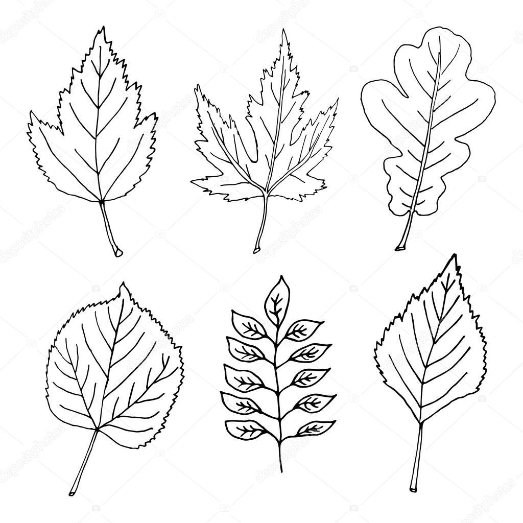 Hand Drawn Leaves Doodles Set