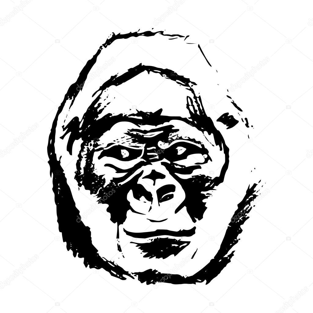 Macaco De Cabeca Graficos