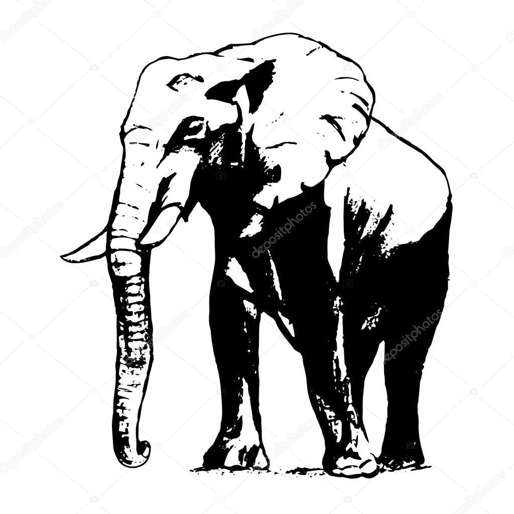 Elephant In Black And White The Graphic From The Hand