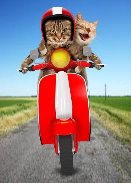 Grappige katten Stockfotos Rechtenvrije Grappige katten