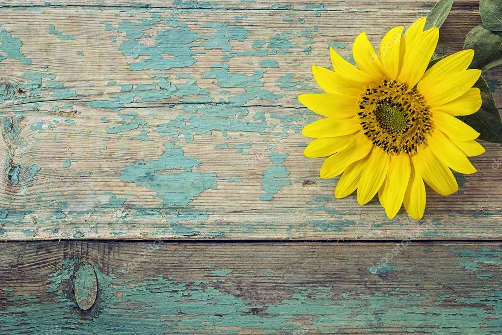 Fall Sunflower Desktop Wallpaper Background With Sunflower On Old Wooden Boards With