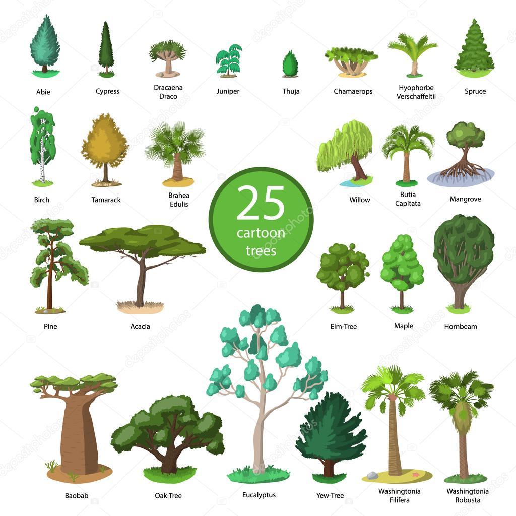 25 Diversidad Del Conjunto De Arboles