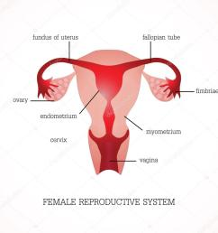 structure and function of human female reproductive anatomy system isolated on background human anatomy education vector illustration vector by poemsuk [ 1024 x 1024 Pixel ]