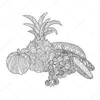 Frutas para colorear libro de vectores adultos  Vector de