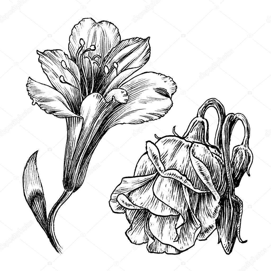 Ink Drawings Series Vintage Flower Line Art Illustration