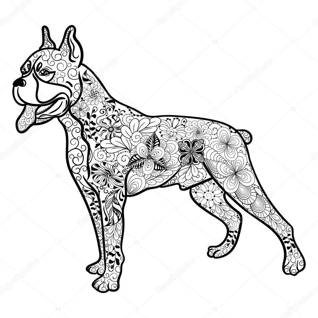 Boxer Hund Doodle