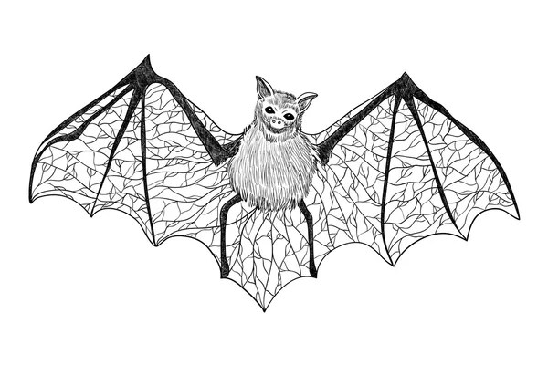 Ornament with bats. Black and white illustration. Tattoo