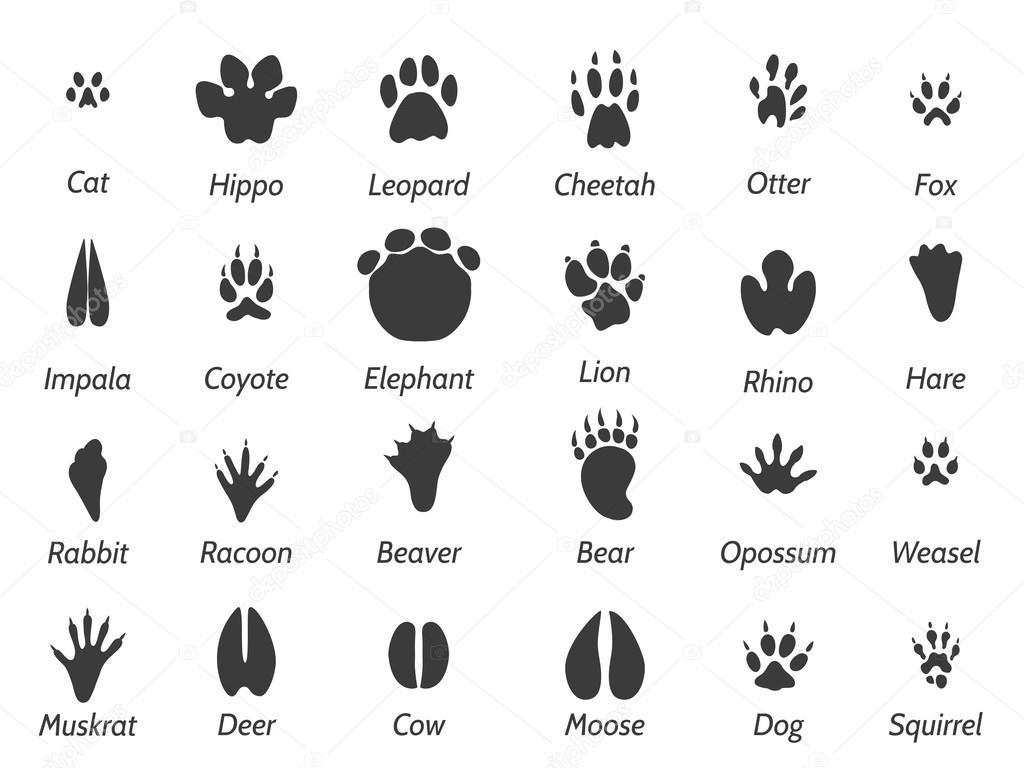 Wildlife Tiere Fu Abdrucke