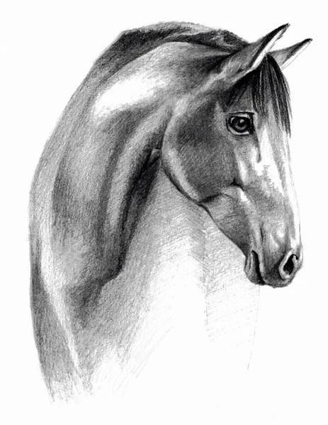 Sketsa Gambar Kuda : sketsa, gambar, Sketsa, Foto,, Gambar, Bebas, Royalti, Depositphotos®