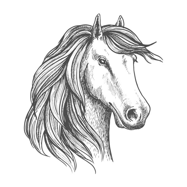 Outline Horse head — Stock Vector © tanjasum84.gmail.com