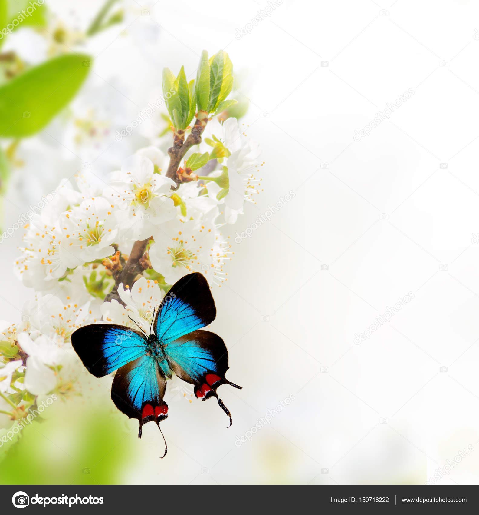Imagenes Animadas Mariposas De Brillantes