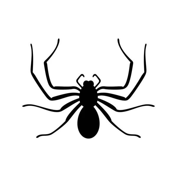 Spider Schabe Marienkfer Pillbug Papa Lange Beine Und